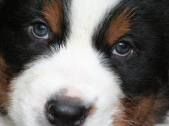 Ihr Hund mit in den Urlaub nach Lofer! 4