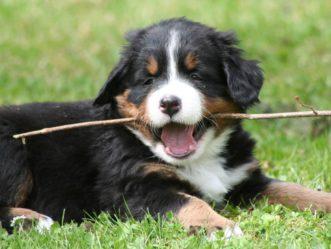 Ihr Hund mit in den Urlaub nach Lofer! 6