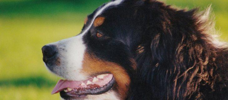 Ihr Hund mit in den Urlaub nach Lofer! 9